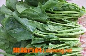 秋菠菜的种植技术和种植时间
